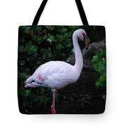 Profile Of A Pink Lesser Flamingo Tote Bag
