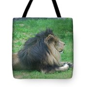 Profile Of A Sleeping Lion In Grass Tote Bag