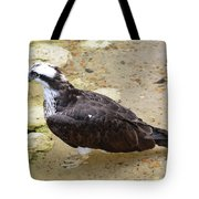 Profile Of An Osprey Bird In The Shallows Tote Bag