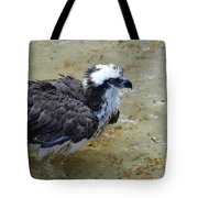 Profile Of An Osprey In Shallow Water Tote Bag