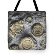 Promicroceras Planicosta, Early Tote Bag