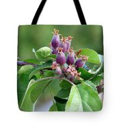 Promise Of Apples To Come Tote Bag