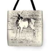 Pronghorn Angelope Tote Bag