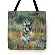 Pronghorn Antelope Amid Fall Foliage Wyoming Tote Bag