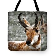 Pronghorn Buck In Snow - Yellowstone National Park Tote Bag
