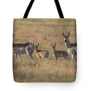 Pronghorn Fawns And Their Mothers Tote Bag