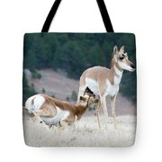 Pronghorn Feeding Tote Bag