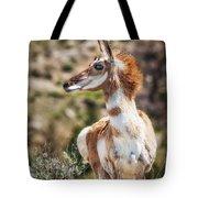 Pronghorn Mother Tote Bag