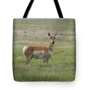 Pronghorn On The Plains Tote Bag