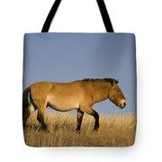 Przewalskis Stallion Tote Bag