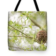 Puffed Up Little Owl In A Willow Tree Tote Bag