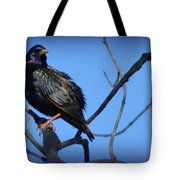 Puffed Up Starling Tote Bag