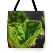 Pumpkin Leaf 2 Tote Bag