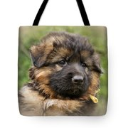 Puppy Portrait II Tote Bag by Sandy Keeton