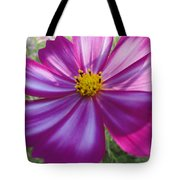 Purple And White Cosmos Tote Bag