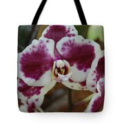 Purple And White Orchid Tote Bag
