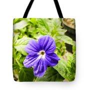 Purple Browallia Flower Tote Bag