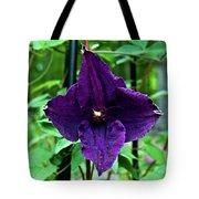 Purple Clematis Henryi Tote Bag
