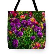 Purple Dahlias Tote Bag