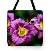 Purple Day Lillies Tote Bag