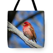 Purple Finch In Spring Tote Bag