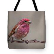 Purple Finch On Barbwire Tote Bag