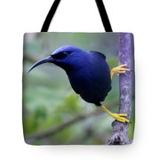 Purple Honeycreeper Tote Bag