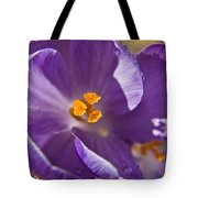 Purple Spring Crocus Tote Bag