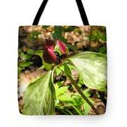 Purple Trillium Tote Bag