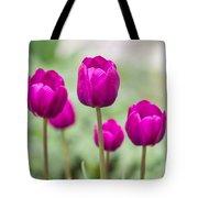 Purple Tulips 1 Tote Bag