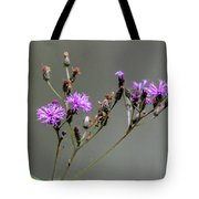 Purple Wildflower In Shiloh National Military Park, Tennessee Tote Bag