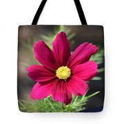 Purple Wood Aster  Tote Bag
