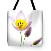 Purple Yellow Tulip 2 Tote Bag