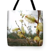 Pussy Willow Blossoms Tote Bag