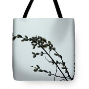 Pussy Willow Catkins Tote Bag