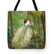 Pussy Willow  Tote Bag