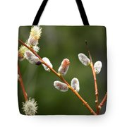 Pussy Willows In Spring Tote Bag