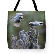 Pygmy Nuthatch In Flight Tote Bag