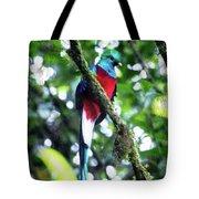 Quetzal In Monteverde Tote Bag