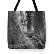 Quinault Rain Forest 3152 Tote Bag
