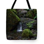 Quinault Washington Rain Forest Tote Bag