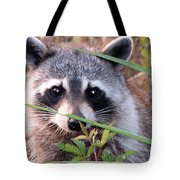 Raccoon 3 Tote Bag