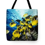 Raccoon Butterflyfish Tote Bag