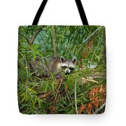 Raccoon Napping On Log Tote Bag
