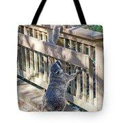 Raccoon Shenanigans Tote Bag
