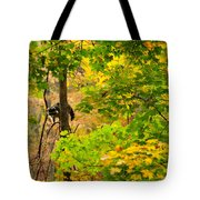 Racoon In Fall Trees Tote Bag