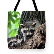 Racoons In Tree Tote Bag