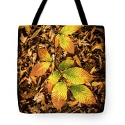 Radiant Beech Leaf Branches Tote Bag