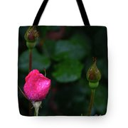 Rain Covered Pink Rose And Buds Tote Bag