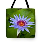 Rain Drenched Blue Lotus In Grand Cayman Tote Bag